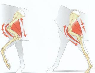 contractie spieren.jpg-for-web-normal