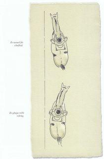 Voorbeeld boven: De natuurlijke scheefheid. Voorbeeld onder: De gebogen rechte richting.